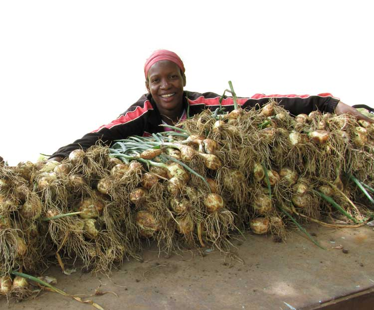 Memel.Global-Woman with onions